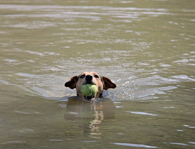aportování psa
